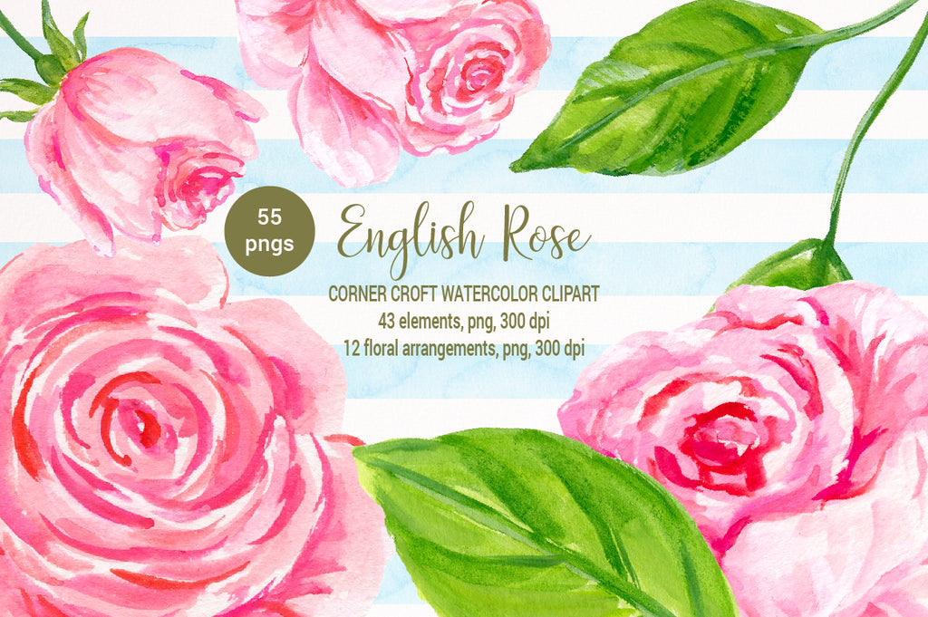 watercolor pink rose clipart, English rose illustration, hand painted rose, digital download