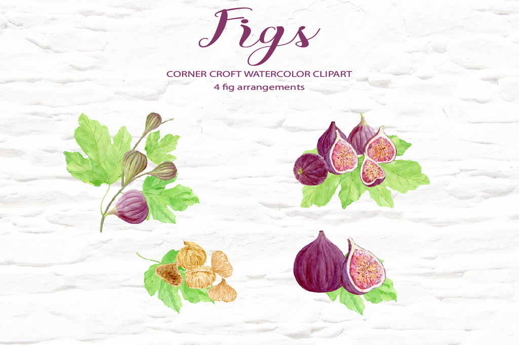 Watercolor figs, fig illustration, fig composition