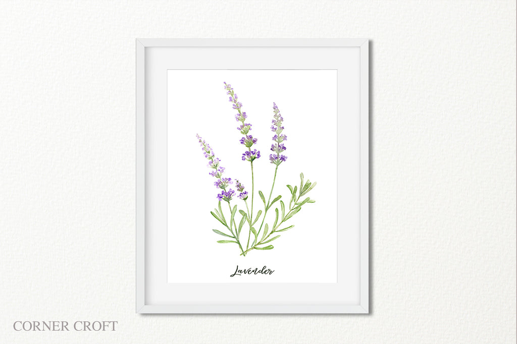watercolor lavender illustration, lavender with purple flower, lavender kitchen decor, instant download