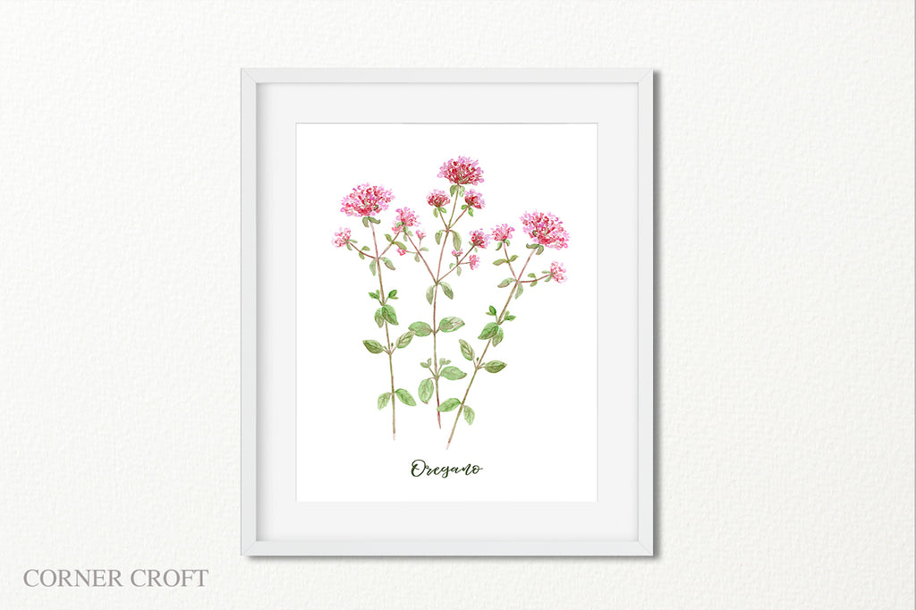 watercolor herb oregano pink flower, botanical illustration of herb oregano
