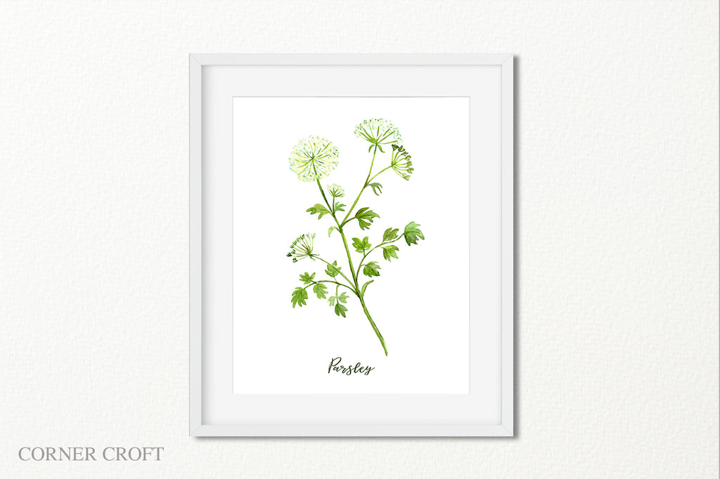 watercolor illustration of herb, parsley illustration, kitchen print