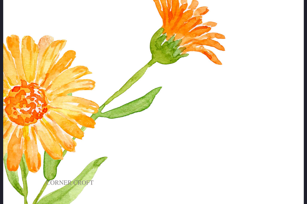 kitchen flower printable, calendula, herb flower illustration