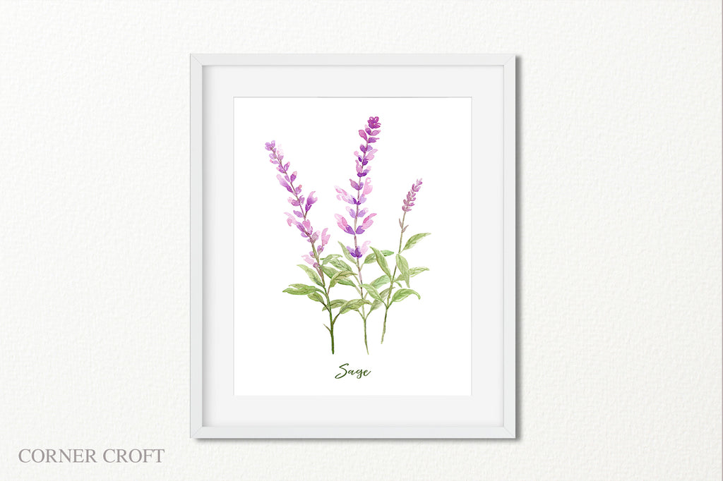 watercolor illustration of sage, herb sage branches, sage flower, pink flower spikes
