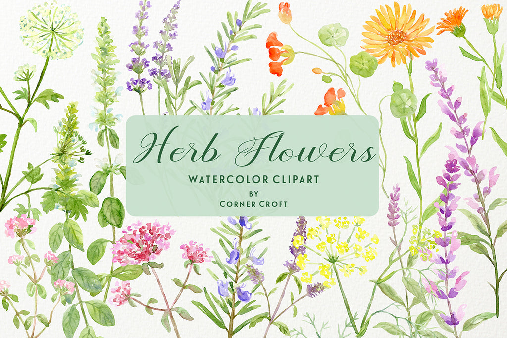 watercolor flowering herb collection, herb flowers, herb flower branches