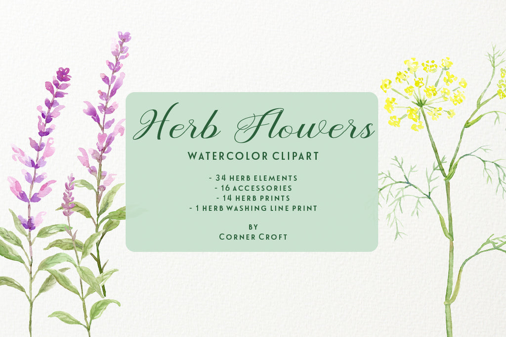 watercolor herb flower collection, basil, borage, chamomile, fennel (dill), lavender, mint, nasturtium, oregano, parsley, pot marigold, rosemary, rue, sage and thyme