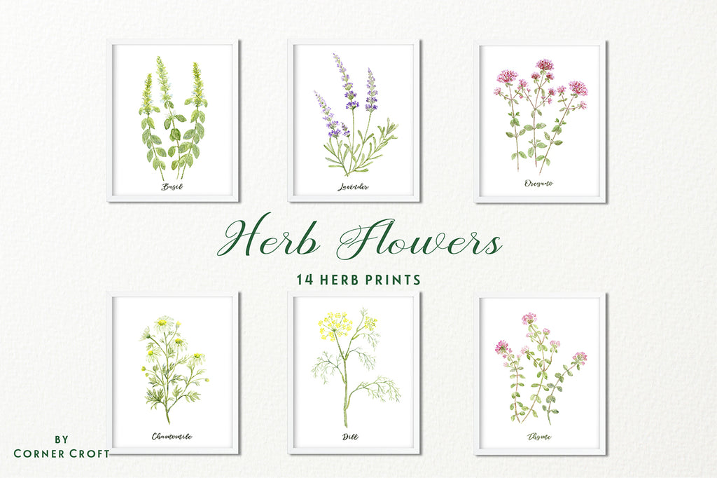 herb print, watercolor herb illustration, instant donwload