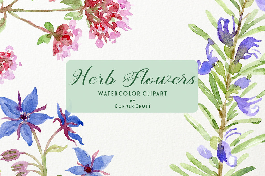 watercolor flowering herb illustration, instant download
