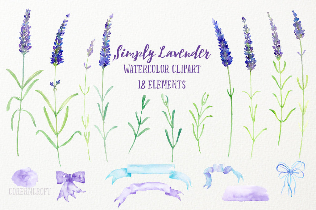 herb lavender illustration, digital download