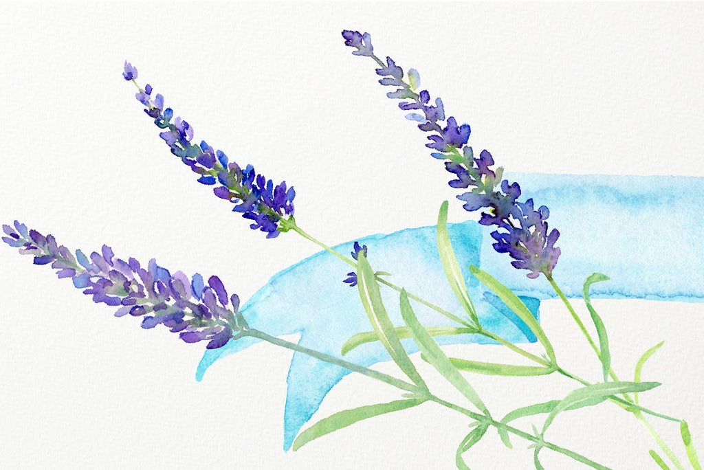 watercolour clipart simply lavender, corner croft design