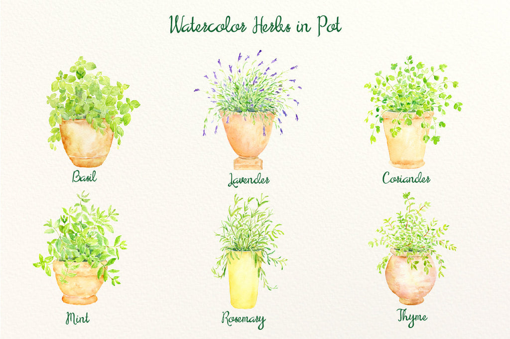 Watercolor herbs in terracotta pots, basil, mint, rosemary, coriander, thyme and lavender printable