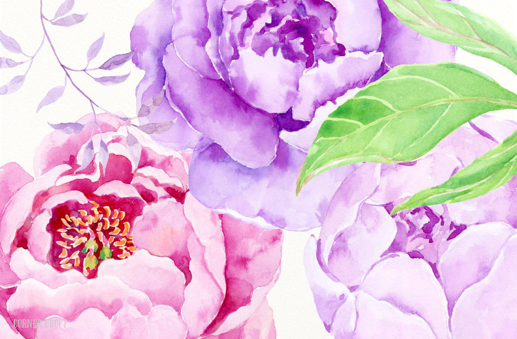 watercolor peony clipart, pink peony, purple peony, instant download