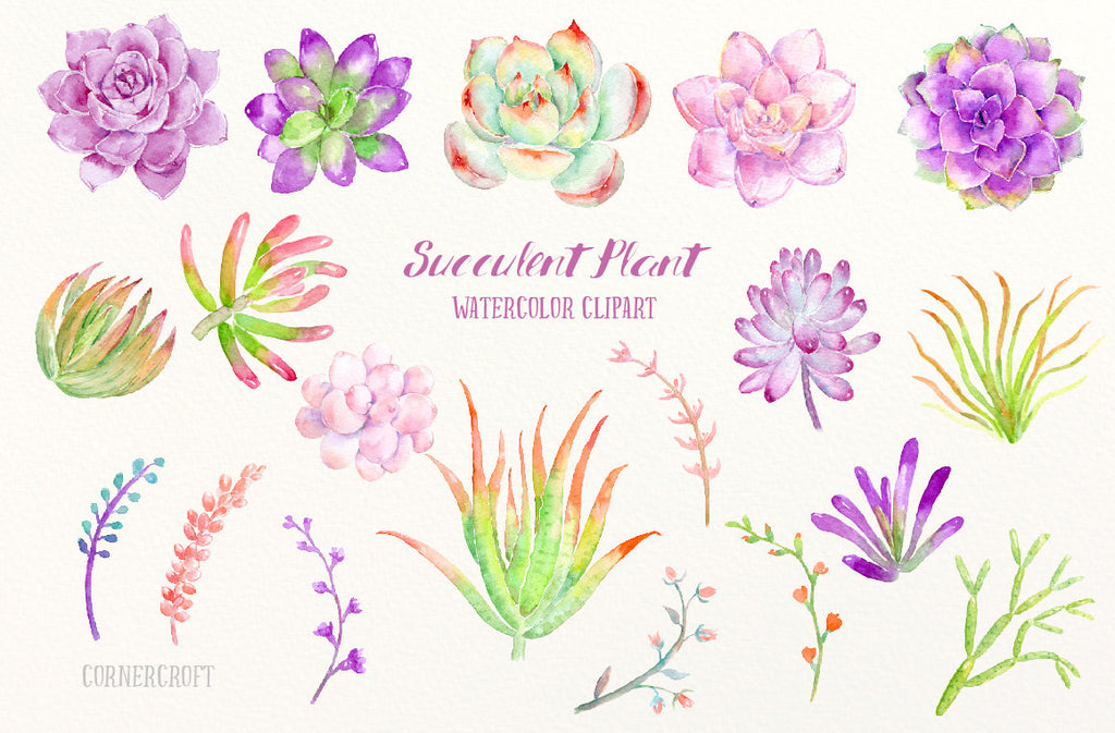 watercolor clipart succulent plant in pink and purple theme