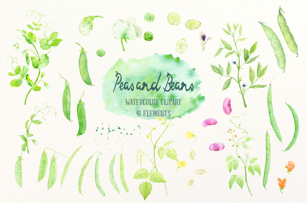 Watercolor Peas and Beans, garden peas, mangetout, green beans and runner beans for instant download, watercolor Legumes