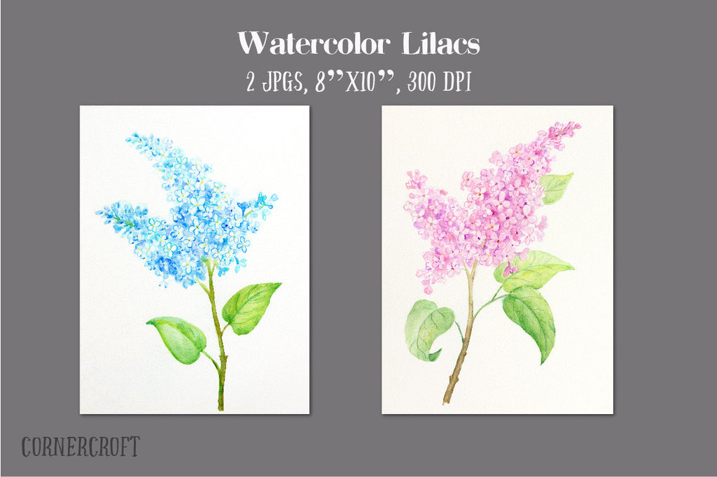 watercolor pink lilac and blue lilac illustration, watercolor illustration, watercolor clipart
