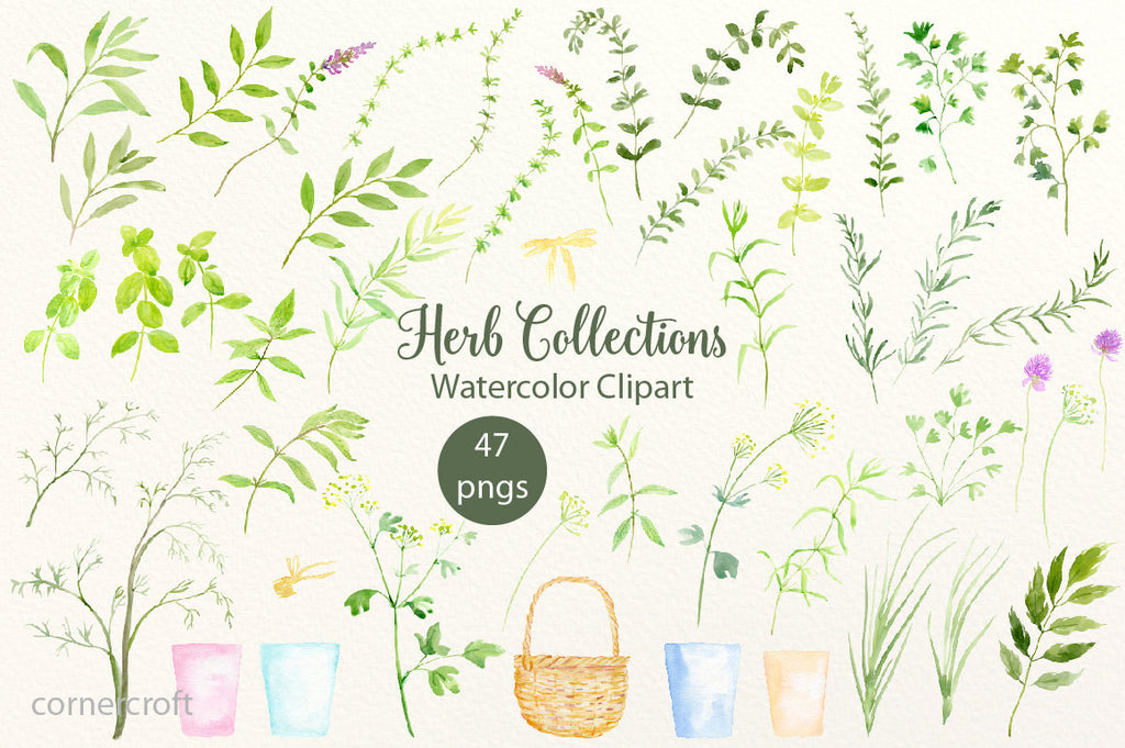 Watercolor herbs including basil, mint, parsley, bay leaves, chives, thyme, sage and rosemary branches, marjoram, oregano, lovage, coriander and tarragons, pots and basket for instant download.