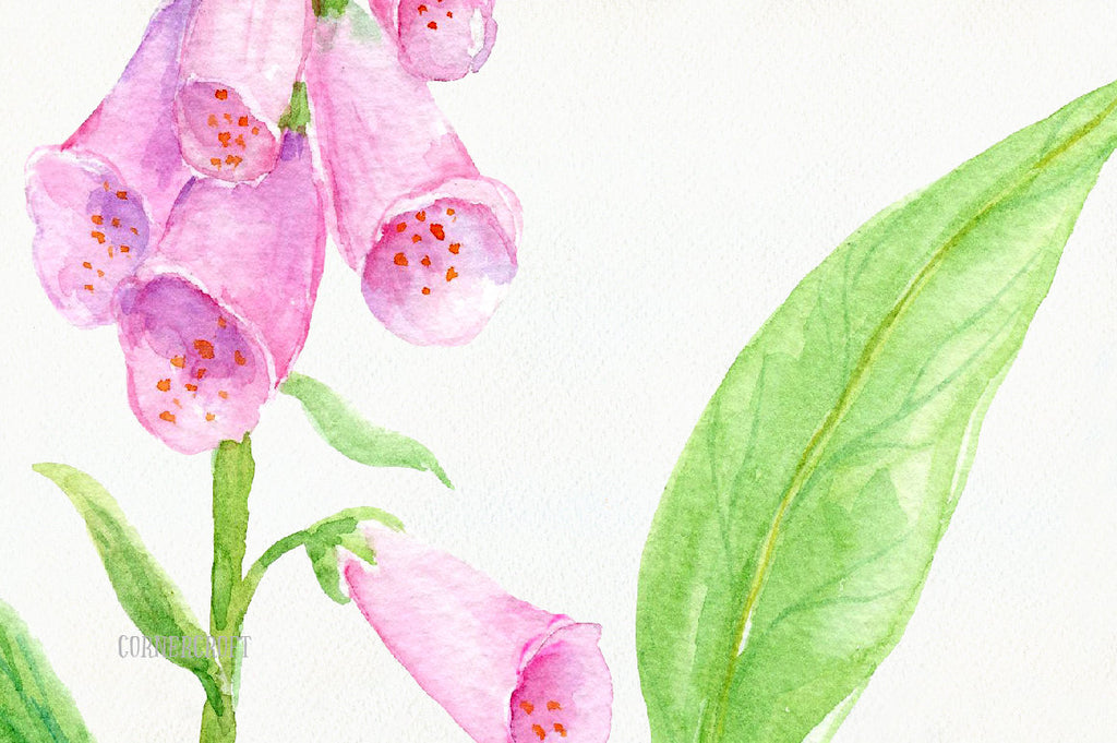 watercolor garden flower, pink foxglove, instant download, cottage plant