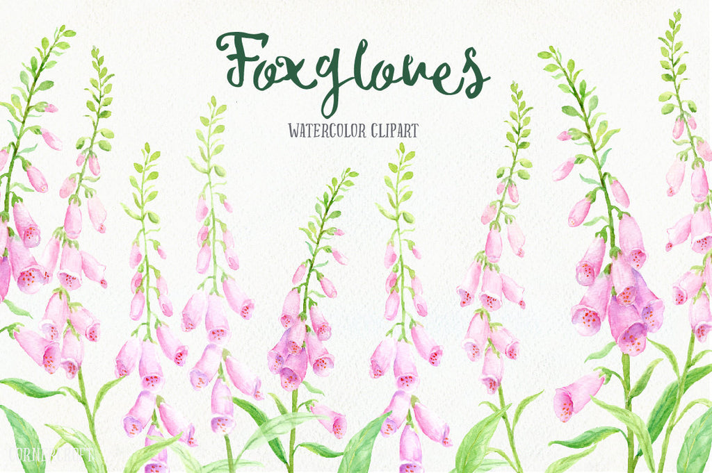 Watercolor clipart pink foxgloves