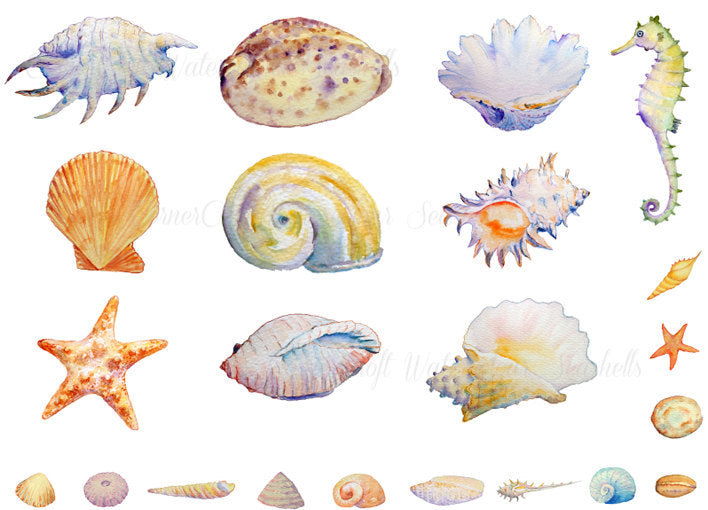 watercolor shell clipart, seashell, seahorse, star fish illustration, instant download