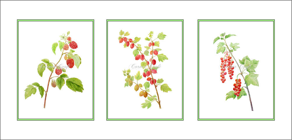 Watercolor clipart of soft fruit branches, summer berry, red currant, gooseberry, strawberry, raspberry
