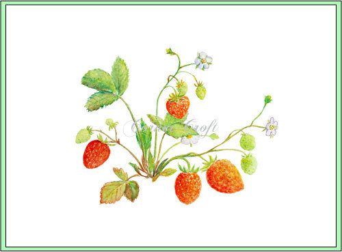 Watercolor strawberry plant, watercolor clipart, corner croft clipart.