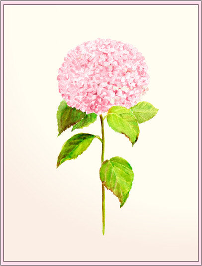 watercolor illustration pink hydrangea, instant download, flower illustration
