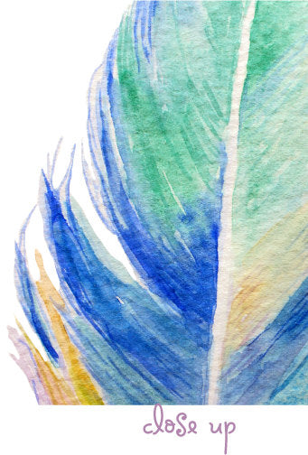 watercolor feather illustration, detailed feather, clipart
