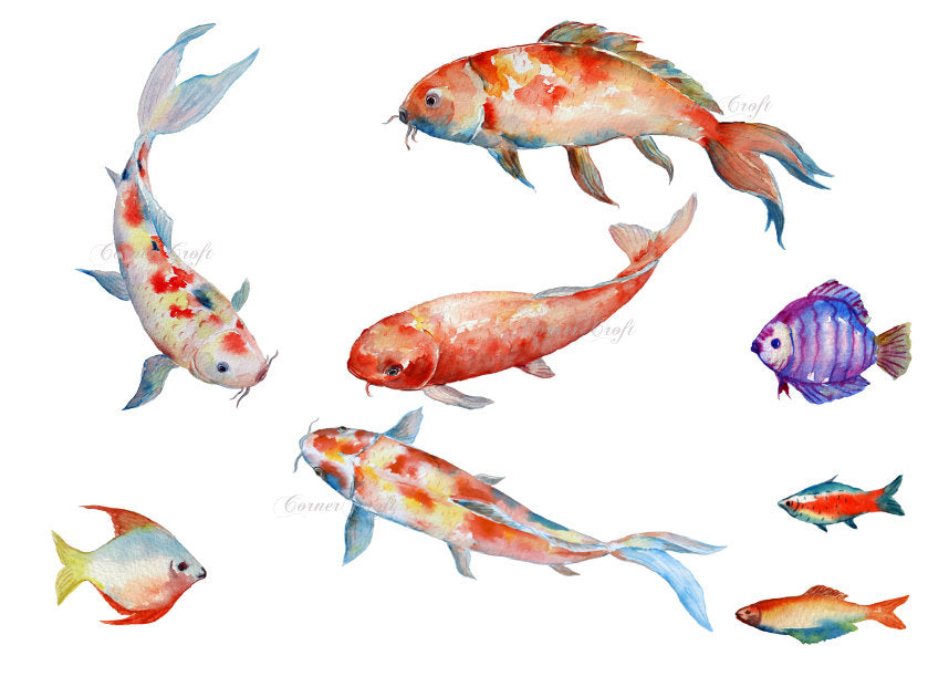 watercolor koi illustration, carp, tropical fish