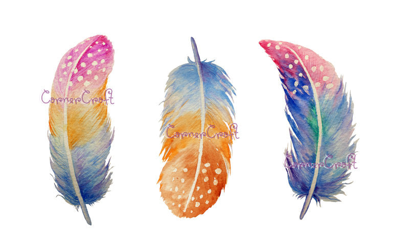 Watercolor spotted feathers, watercolor feather illustration
