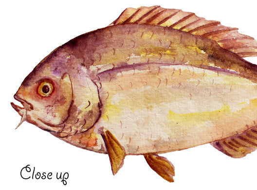 watercolor fish illustration instant download, carp, trout, tuna, sardine, pike, snapper, salmon and sardine