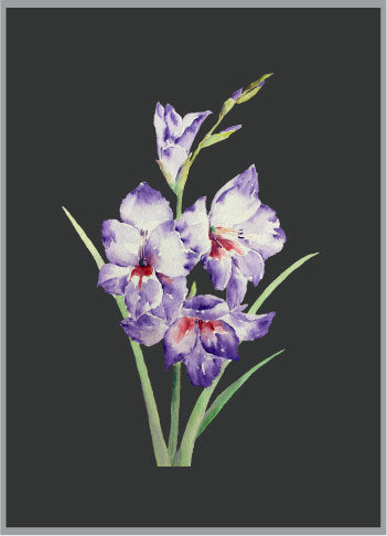 watercolour pink gladiolus, still life gladiolus, corner croft design