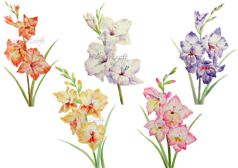 Hand painted large watercolor flowers gladiolus white, yellow, pink, purple and orange