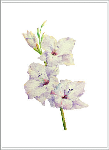 large flower clipart, watercolour gladiolus
