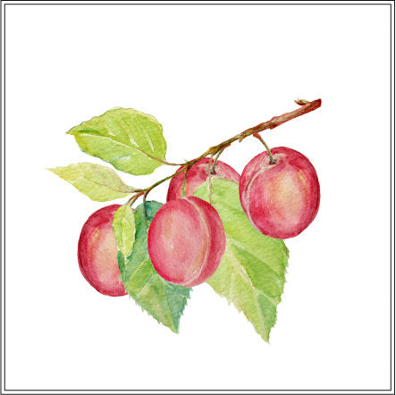 watercolor plum clipart, golden and red plums, plum branch, corner croft