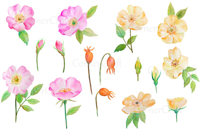 watercolor pink and yellow rose clipart, botanical illustration