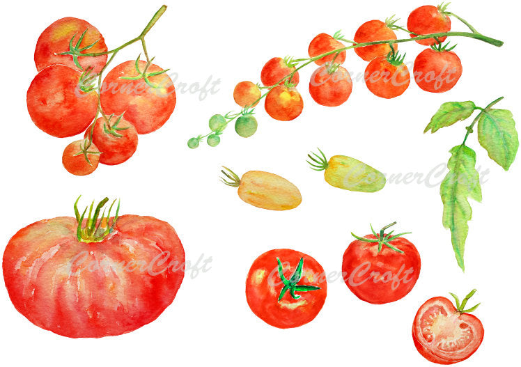 watercolor tomato clipart, red tomato, cherry tomato, beef tomato, vegetable illustration