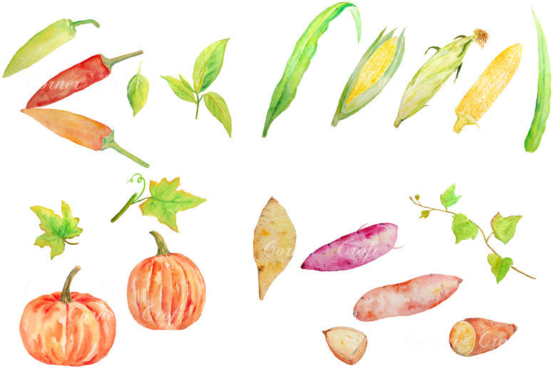 watercolor illustration vegetables sweet potatoes, chilli peppers, pumpkins and sweet corns