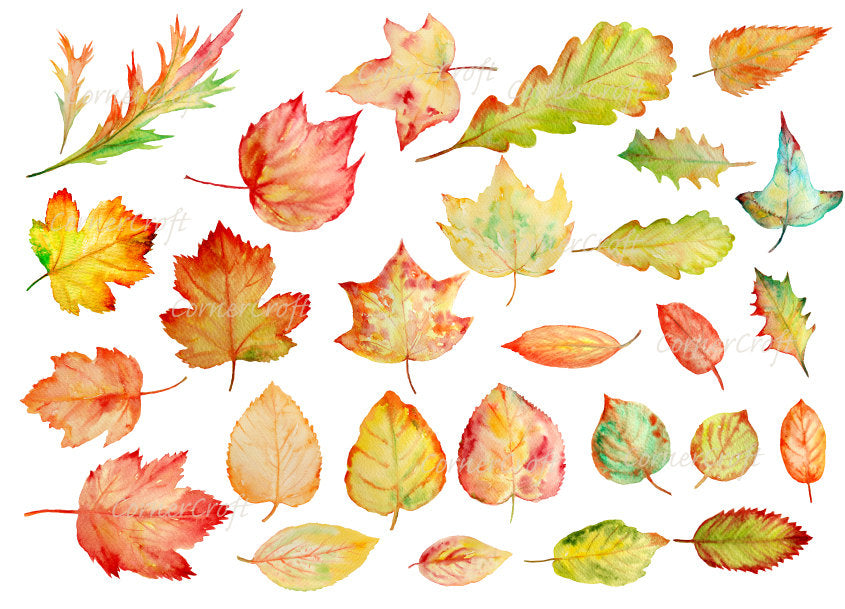 watercolor autumn leaf, maple, oak, lime, ivy and acer