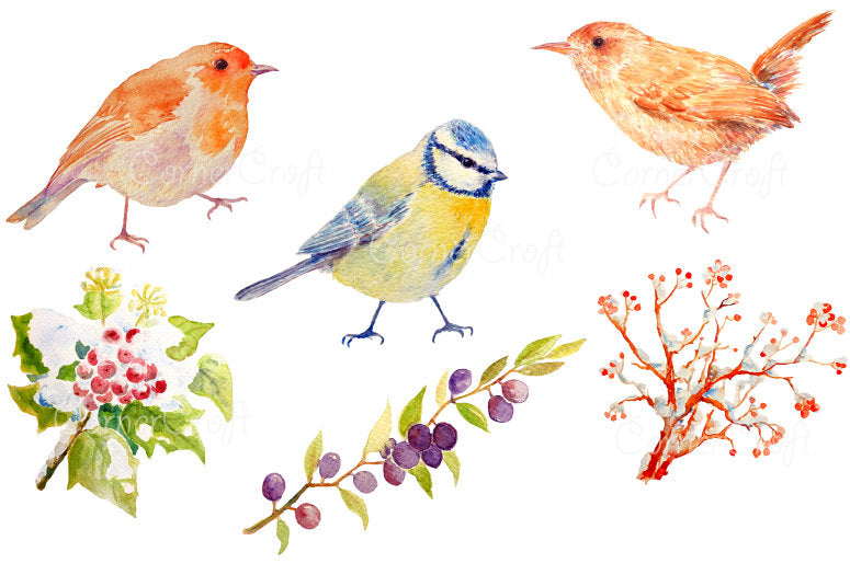 watercolor illustration of robin, blue tit, blue bird, wren