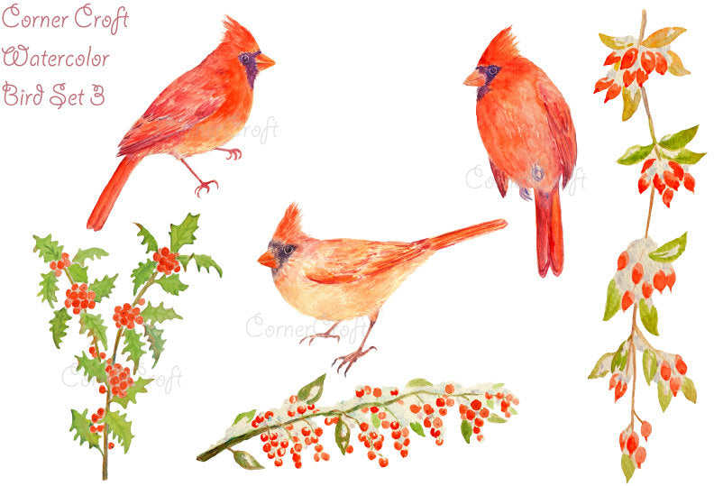 watercolor clipart red cardinals and berries illustration, Christmas clipart instant download
