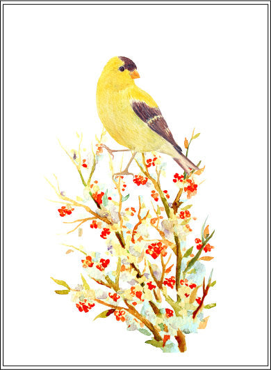 watercolor goldfinch clipart berries in snow, wildlife illustration