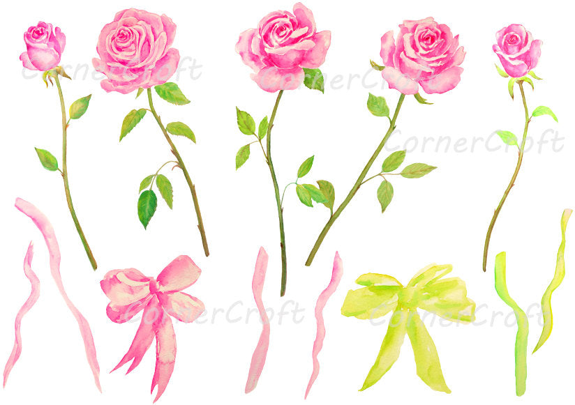 watercolor pink rose, tea rose, cut flower, rose clipart