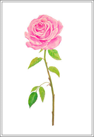 tea rose, pink rose, watercolor rose illustration, instant download