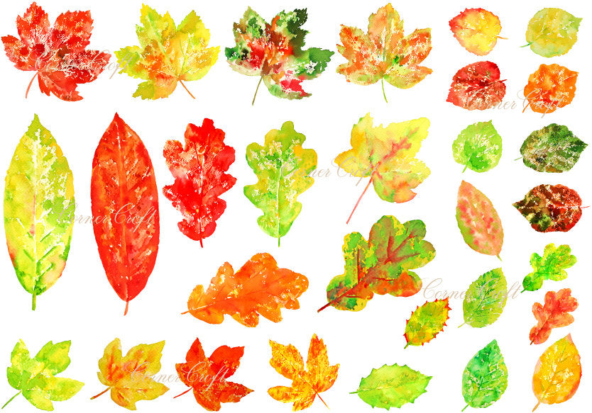 watercolour leaf clipart, stamp effect leaf, green leaf, gold leaf, red leaf.