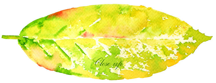 watercolour leaf illustration, stamp effect, bright leaf, instant download
