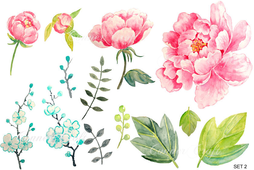 watercolor pink peony, peonies clipart, watercolor peony illustration