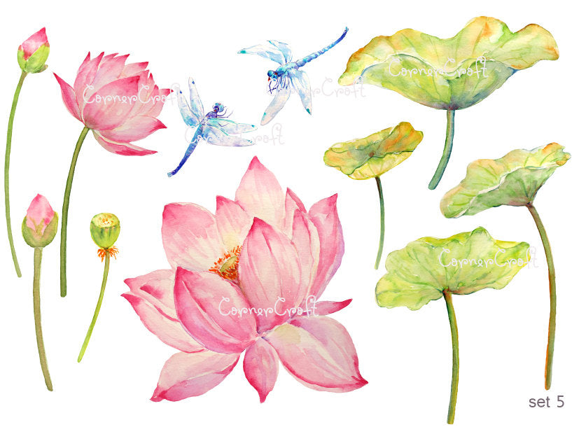 detailed watercolor pink lotus flowers, dragon fly, dragonfly, blue dragonfly