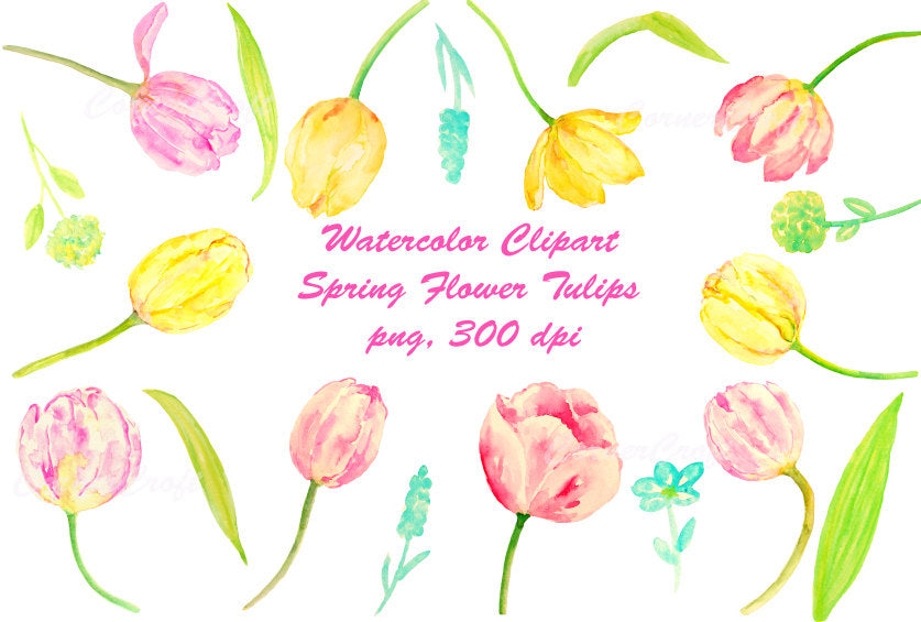 watercolor clipart spring flowers, tulip, pink and yellow tulips.