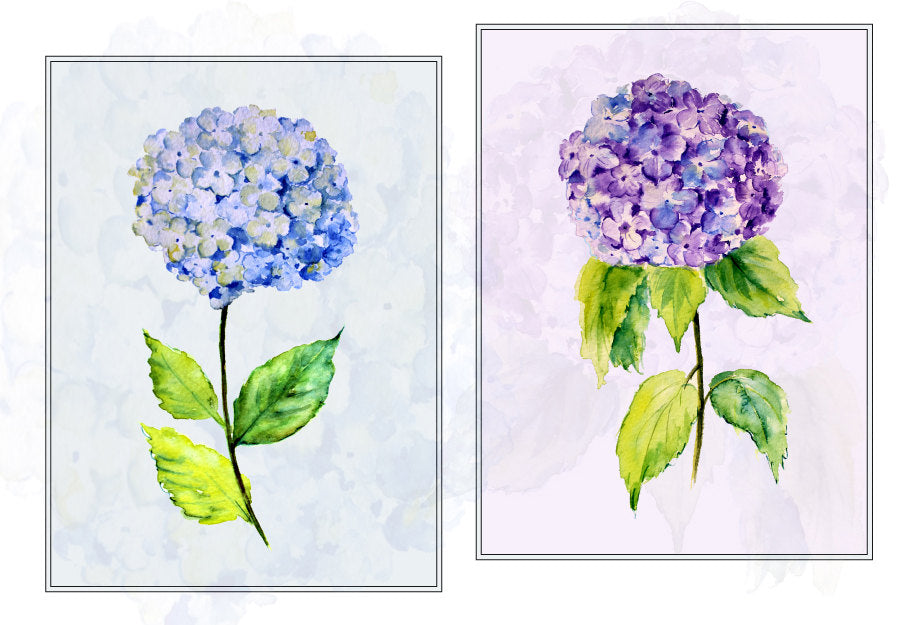 watercolour clipart hydrangea, digital file, instand download