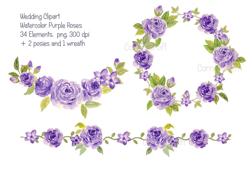 watercolor purple rose collection, purple roses, rose illustration