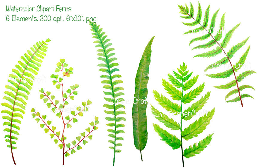 watercolor illustration, grene leaf, fern illustration